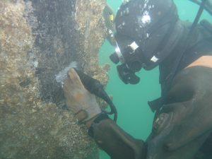 水中調査・撮影 その1