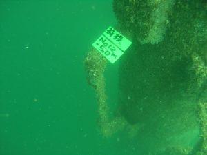 水中調査・撮影 その2
